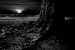 Dark Night (Mat Sheridan) Tags: lighting light sunset sky blackandwhite bw texture field grass night dark landscape photo scary mood shadows good matthew roots surreal atmosphere spooky cinematic sheridan twigs soe beutiful darknight suntree composotion matthewsheridan filmlookalike