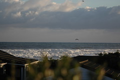 ... (mansapura) Tags: newzealand beach kapiti waikanaebeach afmicronikkor105mm