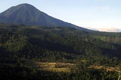 Mountain from the Puri Lumbung cottages (LeelooDallas) Tags: bali mountains forest indonesia landscape fuji rice paddy dana finepix s9500 munduk iwachow danaiwachow