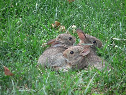Baby Bunnies Part 2