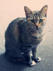 Gato Enigmático