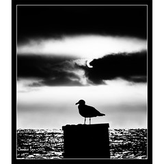 The One (mac_raw) Tags: california sunset bw bird water smile silhouette bravo searchthebest lol kisses hugs lmao fren bff besos redondobeach bighug abrazos xoxoxox magicdonkey tamron18200mm d80 outstandingshots loveyouxxx mywinners mywinner abigfave henyo shieldofexcellence anawesomeshot impressedbeauty superaplus aplusphoto ultimateshot flickrplatinum haveabeautifulday superbmasterpiece infinestyle goldenphotographer cookierocks excellentphotographerawards flickrelite lolkiss macraw juniorwomble ultimatecookie brillianteyejewel cookieliciousimage cookieisthebestandcutest thegoldenmermaid abigfriend canyouseemydnatoo luvyoubigbunchesgirlfriend xoxoxooxoxoxoxoxoxoxoxoxoxo ultimatebird goldenpizzaaward yapnomoretagsforyouthan75younglady inneedd startingrightnow queencookierulesflickrworld thankyouforthisijustgotitxxxx iwontbeheretomorrowillseeyouonsaturdayxxxx hicookie