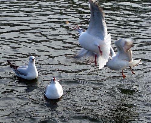 Mine, Mine, Mine - Seagulls - Regents Park, London, England - February 17th 2007