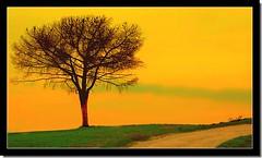 The tree (70) Tags: sunset fab tree nature colors bravo creative chapeau fav awards albero soe gbr