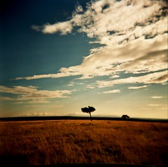 wild savannah sky (czuczy) Tags: blue sky clouds holga savannah plains acaciatree masaaimara