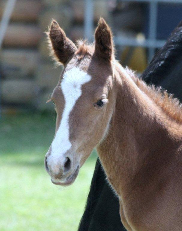 foal2