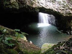 04-12-10, SpringBrook NP, Natural Bridge Gloworm Cave, DSCN2003 (Bobstersays) Tags: naturalbridge springbrooknationalpark
