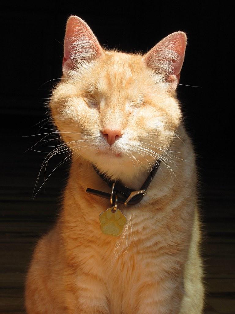 retrato de gumbo (foto #2000)
