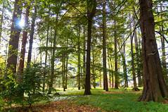 Evergreen (Dan Baillie) Tags: trees forest scotland path walk perthshire evergreen blairatholl