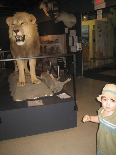 at the little Natural History Museum (Dylan likes the lion)