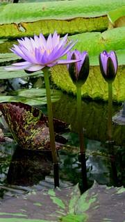 Royal Botanic Gardens Kew 17062007-043