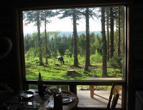 wilderness window