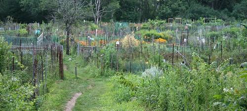 belmont community gardens