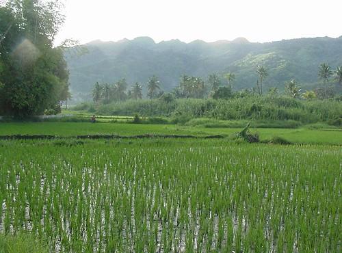 927446605_81f1ca0ad1 - Planting Season in Duero, Bohol - Duero - Bohol