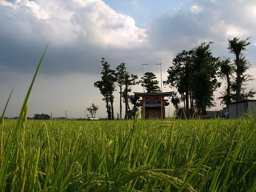 神社 in 田んぼ。