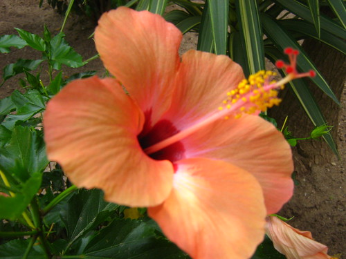 What Do Hawaiian Flowers Mean?