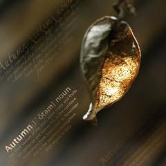 """Autumn"" (Yorick...) Tags: garden leaf dof bokeh yorick 50mmf18d transparence earthtones ligh a artlibre"