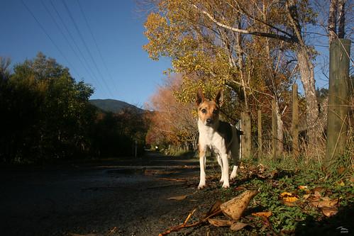 Kaycee in Teal Valley