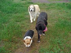 3 grumpy dogs - by 2-Dog-Farm