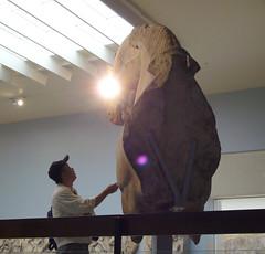 messages from mesopotamia (f-genetix) Tags: museum britishmuseum stonestatue babylon mesopotamia horsestatue babylonia