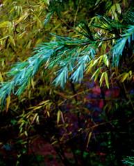 Pine & Bamboo After Rain