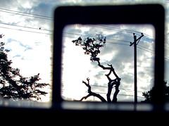 Looking at the world through the ansco 50 (ǝlɐǝq ˙M ʍǝɥʇʇɐW) Tags: tree clouds ansco viewfinder ansco50