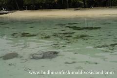 Hudhuranfushi - Underwater World (maldivesguy) Tags: beach aka islands whitesands indianocean resorts maldives oceanview crystalclearwater lohifushi hudhuranfushi underwatermaldives