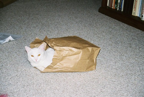 Peek In A Bag