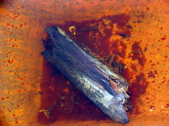 Nedbrytning - Decaying (erlingsi) Tags: orange stain norway geotagged norge herrumbre rust decay rusty norwegen vivid oxido diagonal coastal rusted oxidation noruega rusting grime oc scandinavia rost oxidize derelict 6100 crusty corrosion decayed costiera volda corroded borealis norvege rouille oxydation sunnmøre oxidado oxidized noorwegen kyst noreg oransje decadencia møreogromsdal óxido moho rouillé skandinavia ryð erlingsi ruoste corroding erlingsivertsen decadência rustiness corrosión roña møre rið forfall orín aestheticsofdecay aplusphoto isawyoufirst korrosjon rustrules kystkultur nedbryting geo:lat=62140865 geo:lon=6074785 herrín nordvestlandet forfallent норвегия hardlystainless