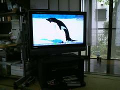 液晶テレビ 画像76