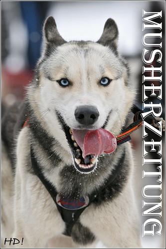 Husky - Foto: Baxter