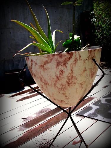 Grandma's pot ex