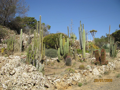 Outdoor cactus garden in riverland 4609843731_c966eb35ca