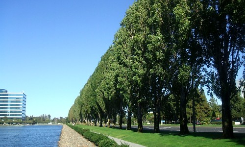 20070721 row-of-lombardy-poplars
