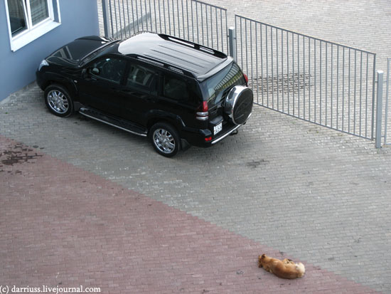 landcruiser_dog