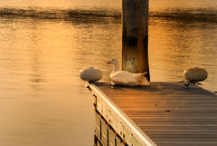 Waterfowl on a jetty - by slack12