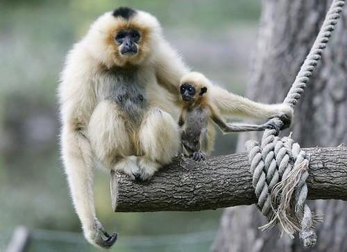 Fotos graciosas de animales