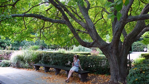 Mona sitting on bench under neat Hobbit tree.