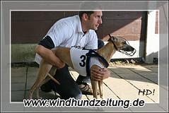 Fotoauswahl Windhund-EM 2007