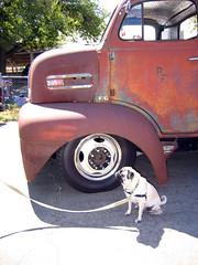 Pug Truck Pug