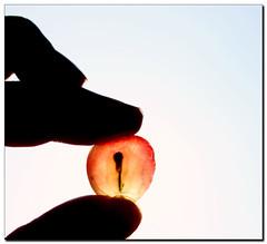 The Sun brings new life.... (Maureen F.) Tags: sun bravo searchthebest fingers backlit grape magicdonkey artlibre autunmalequinox aplusphoto goldenphotographer diamondclassphotographer thegoldenmermaid