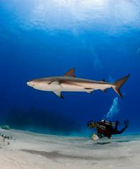 shrkvid7721pws (gerb) Tags: blue shadow fish beautiful topv111 1025fav 510fav wow ilovenature shark cool topv555 topv333 underwater searchthebest topv1111 topc75 topv999 bubbles scuba fv5 loveit topv5555 pi hero winner wildanimal fv10 topv777 diver d200 bahamas topv9999 topv3333 ultra soe animalplanet dreamcatcher artphoto topv7777 aquatica naturesfinest 105mmf28gfisheye 1500v40f 1000v40f outstandingshots pfo 3waychallenge 3wc tvx 3w5 kuwaitphoto diamondclassphotographer flickrdiamond photofaceoffwinner kuwaitartphoto bfgreatesthits bflfgreatesthits mostbeautifulpicture kuwaitart pfogold qemdfinchadminsfavforoct herowinner