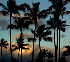 Tuesday's sunrise on Maui (.dzika.) Tags: morning light sky sunrise palms maui clauds frombalcony dzika nikond40