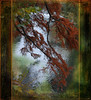 "Tree by the river (Mara ~earth light~) Tags: autumn tree texture love nature beauty photoshop river expression contemporaryart contemporary elf fairy creativecommons devotion wisdom larch "" ourtime callingallangels alberoefoglia oracel memoriesbook photoshopcreativo moodcreations ""altrafotografia"" artistictreasurechest photographymypassion artistictreasurefinest mara~earthlight~ abokehoflight lovelymotherearth"""