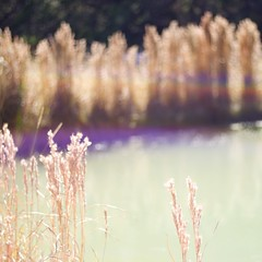 Lucky Moment (Mel VDL Photography) Tags: blue autumn red 2 orange brown sun sunlight blur green fall nature water grass reeds square outside outdoors rainbow pond raw purple bokeh harvest depthoffield lensflare grasses squared colorsoffall 500x500 plentiful huntingseason inandoutoffocus focusschmocus flairandsquare squarnarchy