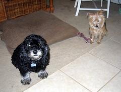 Muffin & Annie