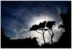 Silhouette (jasontheaker) Tags: summer sun tree silhouette clouds photoshop haze cornwall glow landscapephotography nationaltrust jasontheaker stmichaelsmount