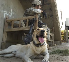iraq (The U.S. Army) Tags: dog soldier military iraq baghdad tuckered usarmy workingdog wwwarmymilusarmysoldiersiraq4fobfalconsoldier workingcanine arabjabour