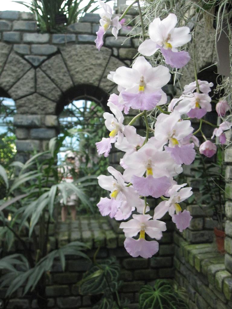Greenhouse, Jardin Botanique