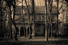 (TomisTaken) Tags: wood autumn tree woodland woods serbia abandonedhouse balkan srbija topola oplenac  umadija dynastykaradordevic dynastykaradjordjevic karaorevi
